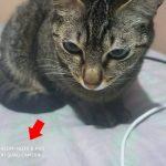 Como Remover Marca d'água nas Fotos do Xiaomi